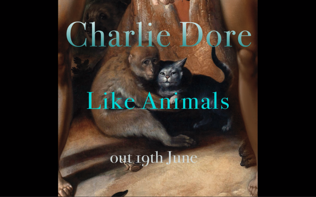 Charlie Dore – Like Animals – album preview video